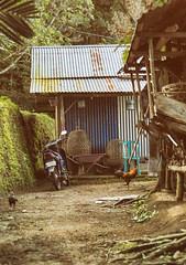 Farmer's shed (QuantumDotter) Tags: scooter farm rural rooster munduk bali banjar indonesia id