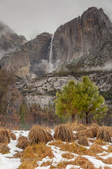IMG_9063.jpg (Chris Murdoch Photography) Tags: brown california californialandscapephotography chrismurdoch chrismurdochlandscapephotography chrismurdochphotography colors cooksmeadow copyrightchrismurdoch fineart fineartphotography flowingwater green landscapephotography landscapes mist nationalparks nature northerncalifornia orange places seasons sierras snow things titlesyosemite trees usa water waterfall waterfalls white winter yosemite yosemitefalls yosemitefallsfromcooksmeadowinwinter yosemitenationalpark yosemitevalley