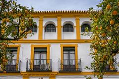 HWW in Sevilla, Spain (Janos Kertesz) Tags: sevilla balcony facade architecture building ancient town city house window exterior tourism historical tourist