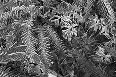 Erster Frost - 0010_Web (berni.radke) Tags: ersterfrost frost raureif wassertropfen rime eisblumen eiskristalle iceflowers icecrystals escarcha