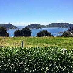 View from the caretaker's cottage kitchen window. Deal Island, Kent Island Group, Bass Strait.