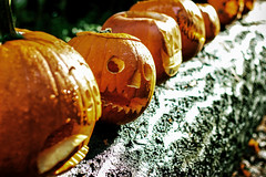 """""""Is there life after garbage truck?"""" :)) (Natalia Medd) Tags: orange jackolantern look pumpkins halloween park autumn street art craft funny color colour colorfull outdoor"""