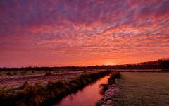 Amazing colours in the backyard (koos.dewit) Tags: 2016 groningen harkstede holland koosdewit koosdewitnl thenetherlandsm clouds colors colours landscape sunrise explored