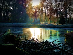 2016-12-04sunny  wood and pond(48) (april-mo) Tags: sunny naturalpark light naturallight morning bois nord france december winter reflection wet