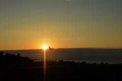 13725074_10210229396718340_2399482085583879921_o (the new Evenstar) Tags: denmark travel bornholm dinamarca viaje nature photography life island sea