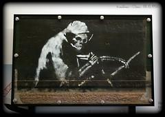 Grim Reaper (zweiblumen) Tags: banksy grimreaper mshed princeswharf harbourside bristol england uk canoneos50d polariser zweiblumen museum art graffiti streetart