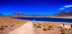 Chile 2013-2794 (sebtac) Tags: chile2013 chile 2013 outdoor reservanacionallosflamencos