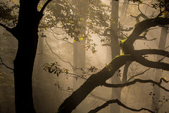Mystische Morgenstimmung im Wald (thunderbird-72) Tags: allemagne saarhunsrcksteig moos deutschland nebel herbst mysterious morgen saarland baum nikond7100 licht wald bume light mettlach morning november trees matin tree silhouette lumire autumn automne germany fog lichtundschatten morgens saarschleife morgenlicht de