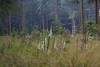 ckuchem-3526 (christine_kuchem) Tags: abholzung baum bienenweide blumen bäume fingerhut holzwirtschaft laubwald lichtung pflanzen spontanvegetation vegetation wald waldlichtung wildblumen wildpflanze wild