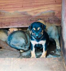 Puppy in a box. (judefrancis91) Tags: dog puppy box nature winter rainy season dslr camera puppies india southindia amateur student beginner awake