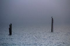 Misty waters (Ib Aarmo) Tags: mist misty sea water mooring piles light shadows outdoor