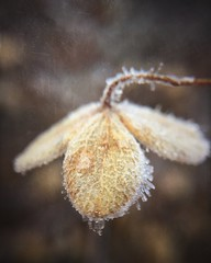 .winter mornings. (allyson.marie) Tags: mobile iphone flower nature macro macromonday