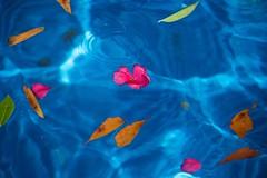 Public fountain, Marietta (tvdflickr) Tags: blue flower water fountain leaves georgia leaf nikon df petal marietta mariettasquare mariettageorgia nikondf photosbytomdriggers photobytomdriggers thomasdriggersphotography