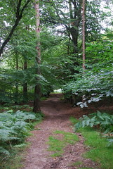 500 Acre Wood (PLawston) Tags: wood uk england forest sussex britain five east hundred pooh 500 winnie acre ashdown wealdway