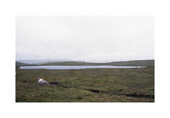 * (Daniel Espinoza) Tags: film analog landscape scotland sheep fineart paisaje analogue landschaft nikonfe shetland analogica argentique filmphotography agfa400 danielespinoza