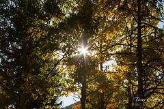 Star burst through the foliage