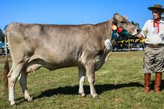 Titulo (Federao Bras. das Associaes de Animais de ) Tags: brasil bra riograndedosul titulo agricultura pecuria expointer esteio agronegcio feiraagropecuria expointer2015 rsgov 31aug15