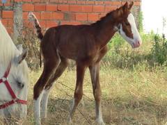 A Me gua e a sua cria (markexa1977) Tags: horses horse nature fauna cavalo cavalinho gua unicrnio