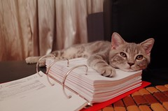 Study hard (Vic Tsai) Tags: cat gr ricoh