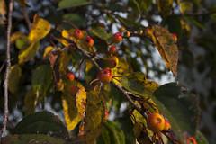 Floriade_251015_29 (Bellcaunion) Tags: park autumn fall nature zoetermeer rokkeveen florapark