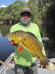 Amazonia 2012 (65)