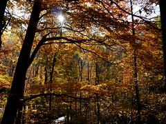Spter Herbst / Late autumn (rudi_valtiner) Tags: autumn trees orange brown sun fall leaves yellow forest austria sterreich laub herbst foliage gelb braun sonne wald bltter bume niedersterreich autriche loweraustria sierningtal