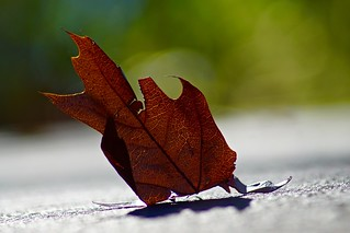 Layedback Leaf, Out for a Walk