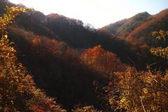 Autumn leaves (Aki tomo PHOTO) Tags: autumn leaves japan