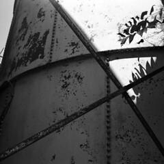 X (Coerulus) Tags: bw 6x6 tlr film mediumformat blackwhite squareformat vintagecamera ilfordxp2 ei400 1950 rolleiflexautomat6x6 3575mmtessartwinslensreflex rolleiflexmxmodel1
