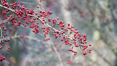 2015-12-17_11-15-31 (wiktor_furmaniak) Tags: bokeh sony jena m42 135mm natureshots carlzeiss passionphotography natureperfection naturecomposition absolutelyperrrfect alpha65
