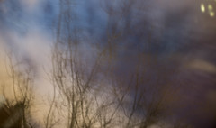 20151222 (zzkt) Tags: longexposure brussels sky blur tree branches bruxelles be brussel f40 bruxxel brsel 120sec leicam9 120secatf40 leicasummicronm35mmf2iv