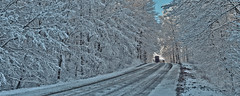 Buggy in bush on Hackbart Road (virgil martin) Tags: winter panorama snow ontario canada forest landscape gimp buggy mennonites wellesleytownship waterlooregion microsoftice oloneo olympusomdem5