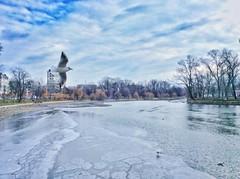 Frozen (Cristian tefnescu) Tags: blue winter sky lake clouds frozen january wolken lac blau bucharest ianuarie herastrau nori ger iarna albastru bucureti pescarus
