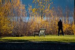 A November Walk in a Park (LongInt57) Tags: park blue autumn trees people brown lake canada man men green fall water grass yellow bench walking landscape person bc okanagan lawn retainingwall
