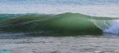 ShadesOfGreen (mcshots) Tags: ocean california travel autumn sea usa beach nature water glass point coast surf waves afternoon stock tubes wave socal cylinder lowtide breakers mcshots swells swell perfection glassy combers losangelescounty