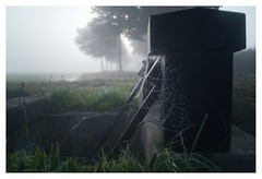Web in the morning dew _ 5 (leo.roos) Tags: camping mist fog robot spider web spin dew sluice twente campsite dauw sluis denham spinnenweb m26 darosa a7s leoroos meyerprimotar3035 overijsselseptemberoktober2015 reggevallei boerdercamping