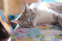 (Rodolfo_Felici) Tags: cats cat animali celesteetontolina