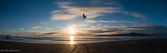Fly free (leah-nz) Tags: beach sand sea bird seagull gull boat ocean island kapitinz sky cloud outdoor