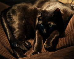 Carl Stretched Out (lennycarl08) Tags: carl cat blackcat lc canon5dmarkiv 5d4 canon5dmkiv