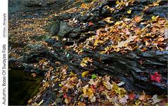 Autumn, Base Of Swayze Falls (jwvraets) Tags: shorthillsprovincialpark stcatharines effingham autumn fall waterfall niagaraescarpment niagara brucetrail opensource rawtherapee gimp nikon d7100 nikkor1224mm