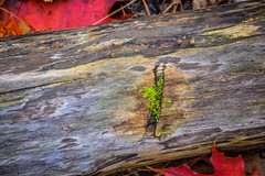 Moss (ildikoannable) Tags: nature moss green macro closeup