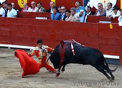 Derechazo de rodillas de Luis Lpez en Acho (Vladimir Tern A.) Tags: toros toreros corridasdetoros limaperu bulls bullfighting bullfighters