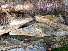 Critters in my log-pile (violetchicken977) Tags: wood logpile pareidolia deer goose dog seedheads