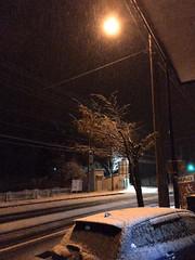 It Wasn't Supposed To... (sjrankin) Tags: 23october2016 edited yubari hokkaido japan snow weather street streetlight gif animatedgif