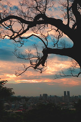 192A8608VQF (HL's Photo) Tags: sunset sky dusk tree colorful color landscape nature cloud cloudy outdoor