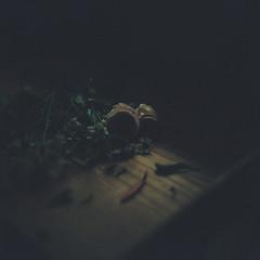 Untitled (Kahori YAGI_Kahoring) Tags: film filmphotography mediumformat kodak portra flower light shadow darkness classical フィルム フィルム写真 花 光 影 カノプリ pentacon pentaconsix biometar