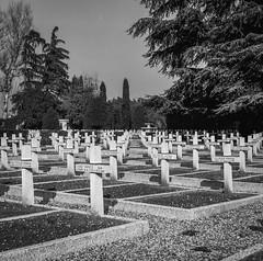 Hasselblad-5 (Riccardo Lisi) Tags: hasselblad 500cm 6x6 bw 120 analog zeiss planar cimitero polonia bologna cimiteropolacco