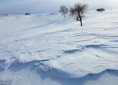 _MG_7452 (c0466art) Tags: 2015 chinese inner mogolia trip travel  grass land hill winter season snow world sunrise trees ice beautiful landscape scenery light canon 1dx c0466art