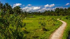 28082013-IMG_6897 (christophecavelli) Tags: landscape nature bali travel