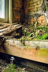 PilzBett (tim.lee Rookie Photograph) Tags: moos bett urbex urban lost natur nikon timleerookie timlee